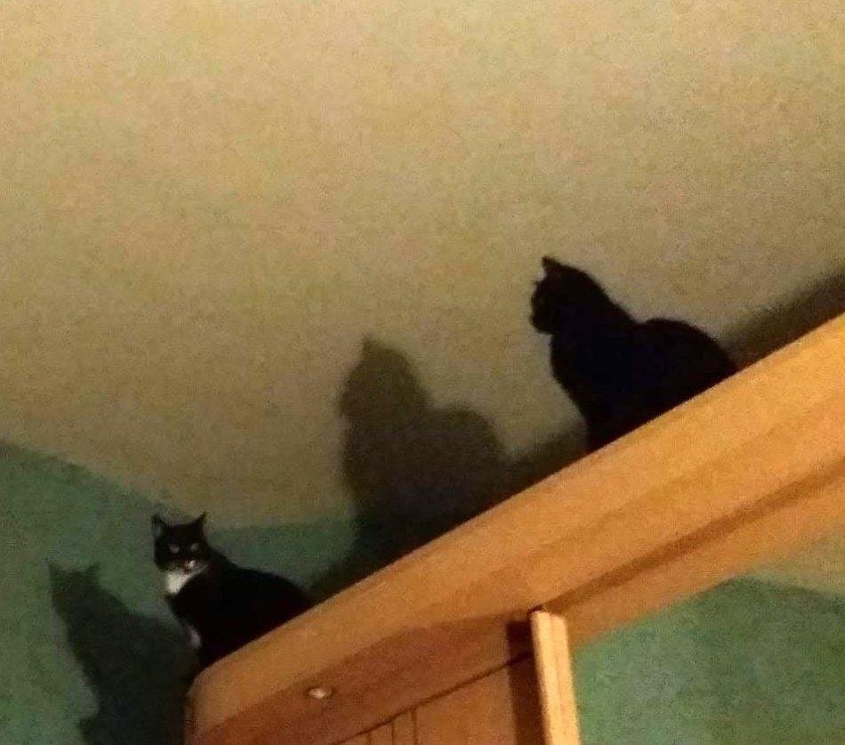 Dwa koty w domu 5