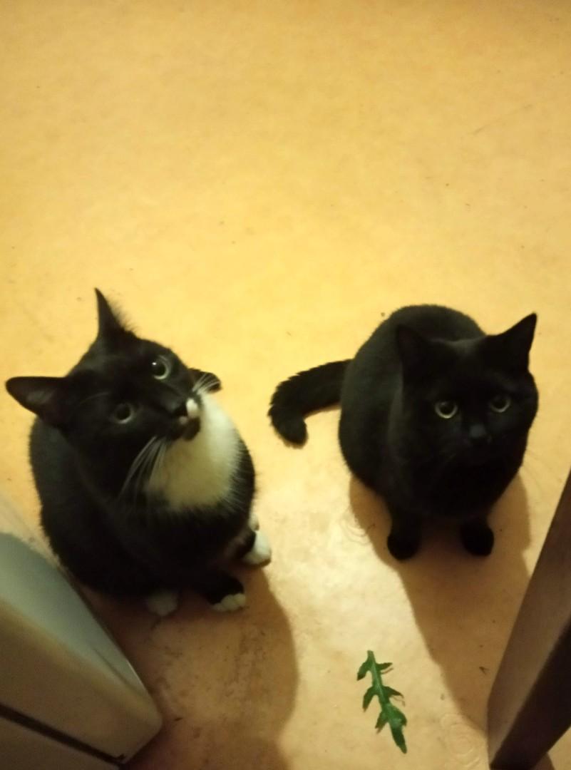 Dwa koty w domu – dają radę? Przekonajcie się! (wideo)