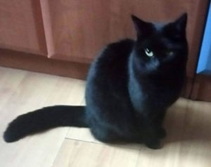 koty okazują uczucia - Reszka