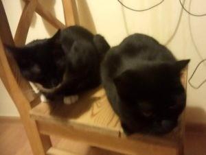 koty okazują uczucia - Reszka i Lucky