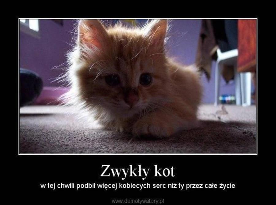 Kocie święta 2