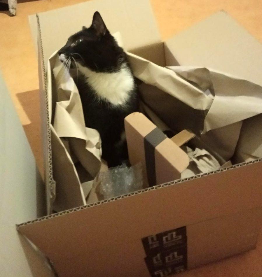 kot w kartonie