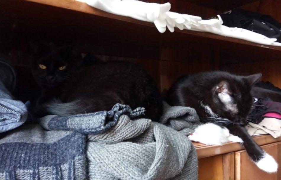 koty śpią w szafie
