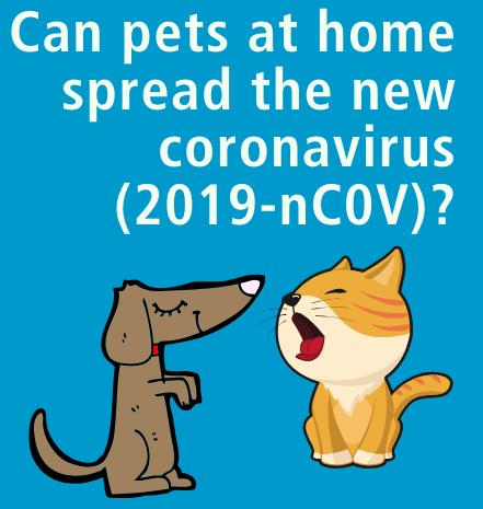 Koronawirus i koty. Fakty i mity