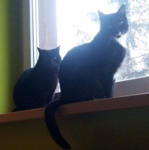 dwa koty na parapecie