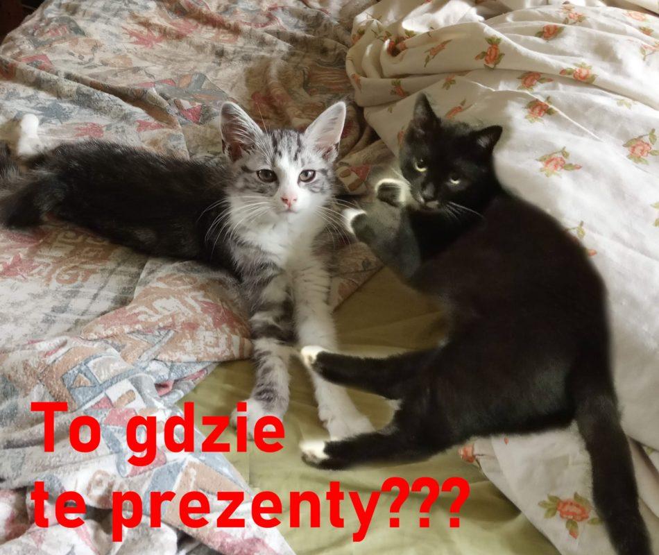 Internationa Cat Day