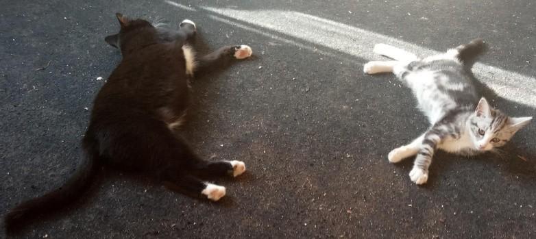 Koty to lenie! Naukowcy potwierdzają to, co kociarze wiedzą od dawna.