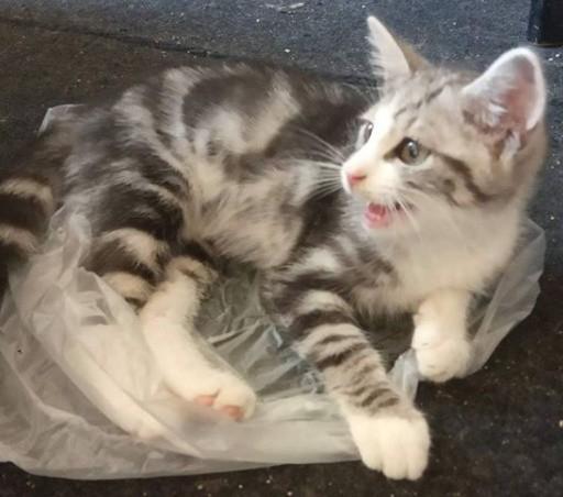 Co robią koty, gdy nikt nie patrzy? Zobacz koty w ukrytej kamerze!